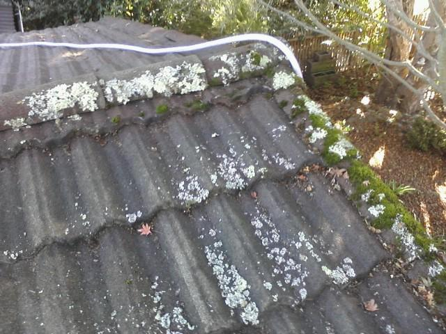 roof-before-cleaning-1