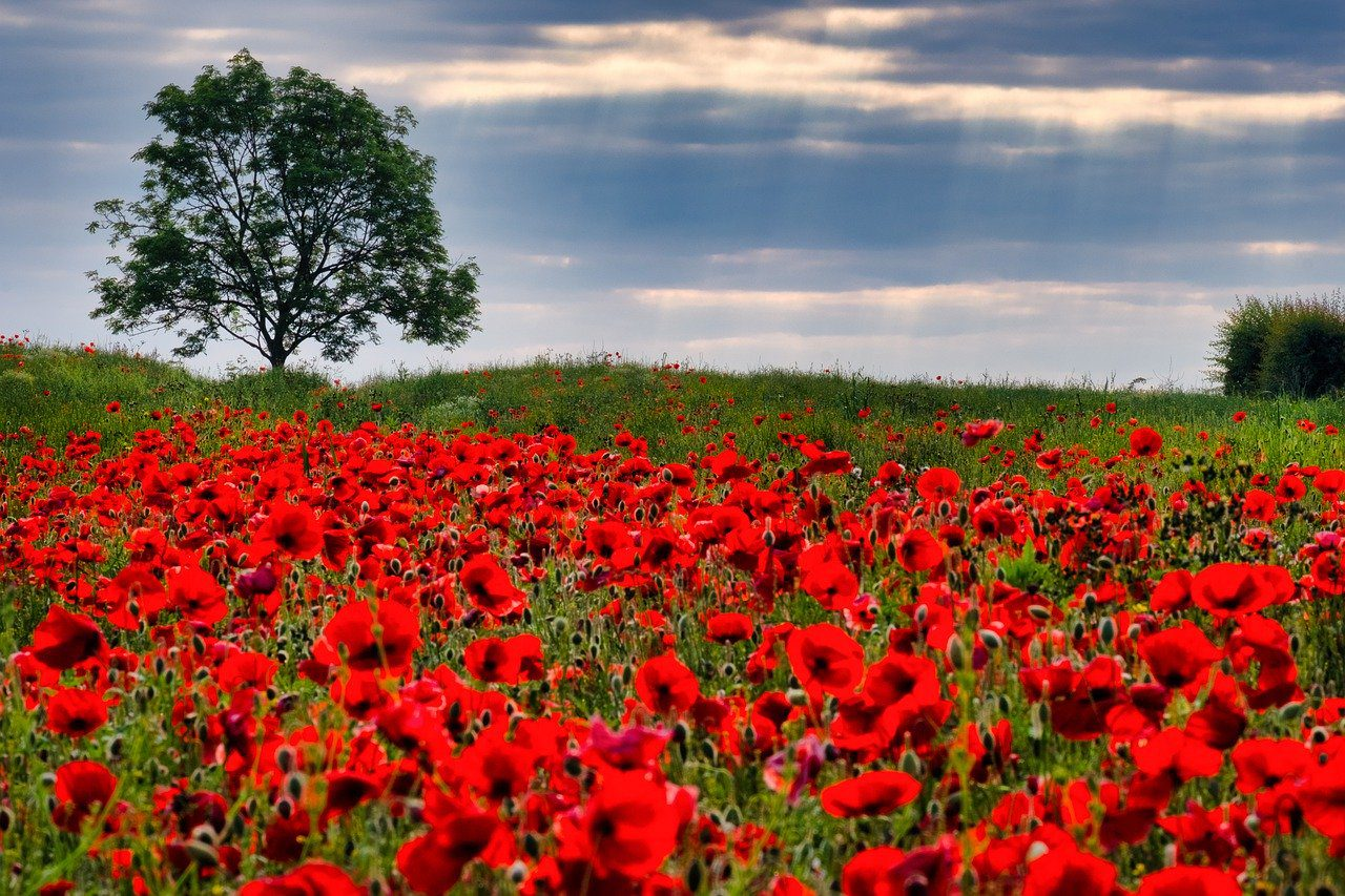 10 important reasons to have a service of remembrance
